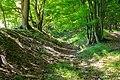 Höxter - 2018-05-20 - HX-001 Buchenwälder zwischen Ziegenberg und Langer Berg (051).jpg