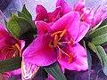 HK CWB 維園年宵市場 Victoria Park Fair - flower purple Jan-2012 Ip4.jpg