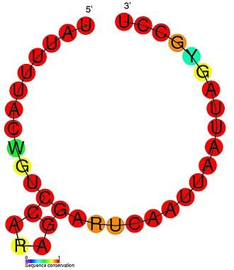 HOTAIR - Image: HOTAIR 1 secondary structure
