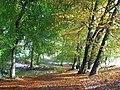 Hailey Wood, Stokenchurch - geograph.org.uk - 1034232.jpg