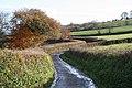 Halberton, between Middle Curham and Crosslands - geograph.org.uk - 87199.jpg