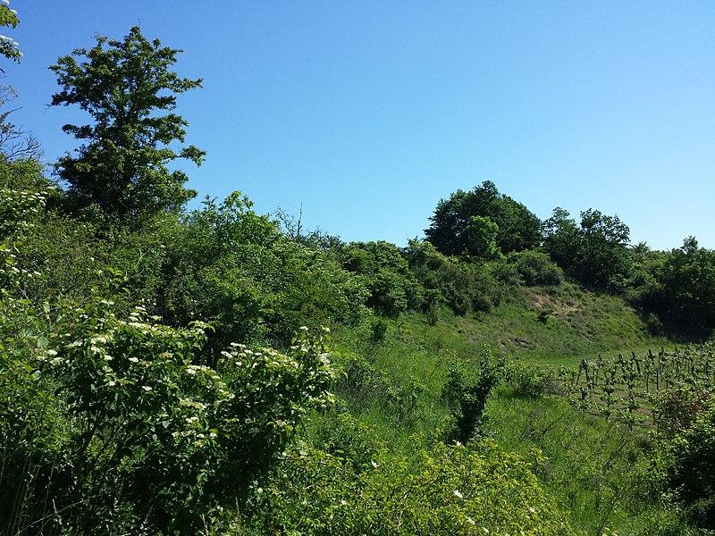 File:Halbtrockenrasen und Weingärten nördlich Oberthern sl9.jpg