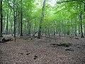 Hambach forest 10.jpg