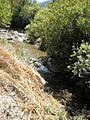 Hammam elouan stream 1.jpg
