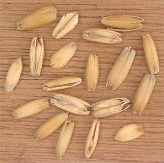 Oat - Oat grains in their husks