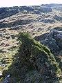 Hawthorn, Birkby Fell - geograph.org.uk - 1262536.jpg