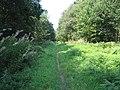 Hazel Hill Wood - geograph.org.uk - 50459.jpg