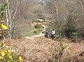 Heading towards Battramsley - geograph.org.uk - 395683.jpg