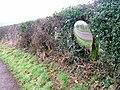 Hedge, Road to Lodge Farm - geograph.org.uk - 120523.jpg