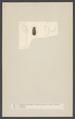 Helophorus - Print - Iconographia Zoologica - Special Collections University of Amsterdam - UBAINV0274 001 02 0015.tif