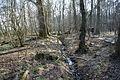 Hildener Heide 2016 143.jpg