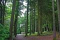Hillsborough Forest, Hillsborough, Co Down. - panoramio.jpg