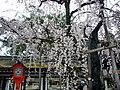 Hirano Shrine 平野神社 - panoramio.jpg