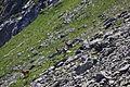 Hirsche fürstkar 1261 13-07-13.JPG