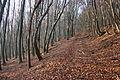 Hochbruckenberg Wald 03.jpg