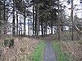 Hopeward Wood - geograph.org.uk - 1077836.jpg