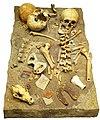 Human and dog bones.jpg