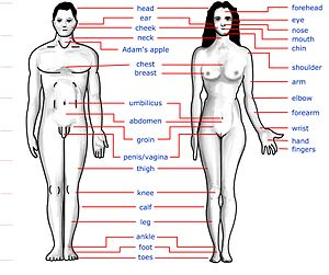 Human body features
