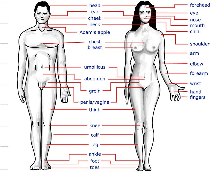 Human+body+parts+names+with+picture