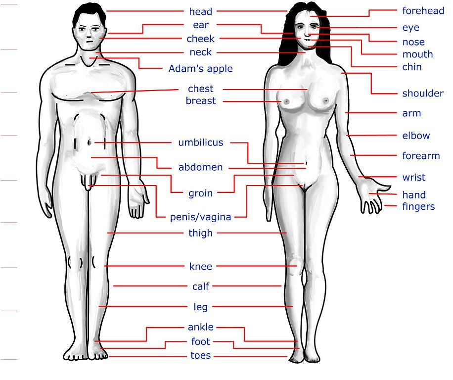 Body structure of transgender-3979