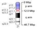 Human chromosome 21 - 550 bphs.png