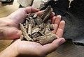 Human remains from Kosiorow.jpg