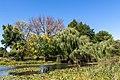 Humboldt Park Pond Chicago 2020-0655.jpg