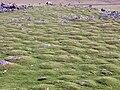 Hummocks on Cox Tor.jpg