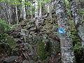 Hunt Lake Trail - Whiteshell PP.JPG