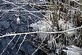 Icicles in Vieresjoki.JPG