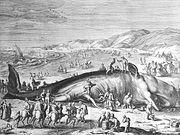 Im Februar 1598 an der holländischen Küste gestrandeter Walfisch
