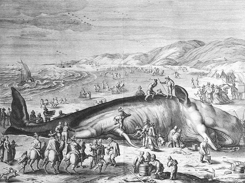 Im Februar 1598 an der holl%C3%A4ndischen K%C3%BCste gestrandeter Walfisch.jpg