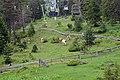 Imst - Alpine Coaster - 07.jpg