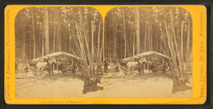 In the pineries of Minnesota, by Zimmerman, Charles A., 1844-1909.png