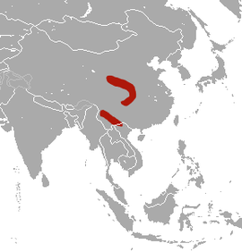 Indochinese Short-tailed Shrew area.png
