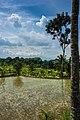 Indonesia - Yogyakarta (26225869094).jpg