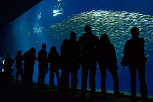 Visitors look through a very large window into an aquarium containing a school of Pacific sardines and mahi-mahi