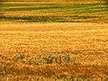 Iran - Fars - Eqlid - A farm in Sarhad - panoramio.jpg
