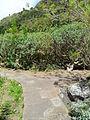 Jardín canario 84.JPG