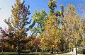 Jardín del Príncipe - panoramio.jpg