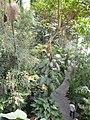 Jardin des plantes Paris Serre tropicale6.JPG