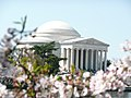 Jefferson Memorial During the Cherry Blossom Festival.JPG