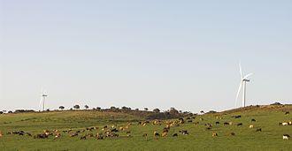 Renewable energy in South Africa - Image: Jeffreys Bay Windfarm 001
