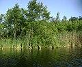 Jezioro Narty 02.JPG