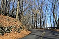 Johnstown late November - panoramio (16).jpg