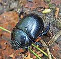 Jyväskylä - beetle 2.jpg
