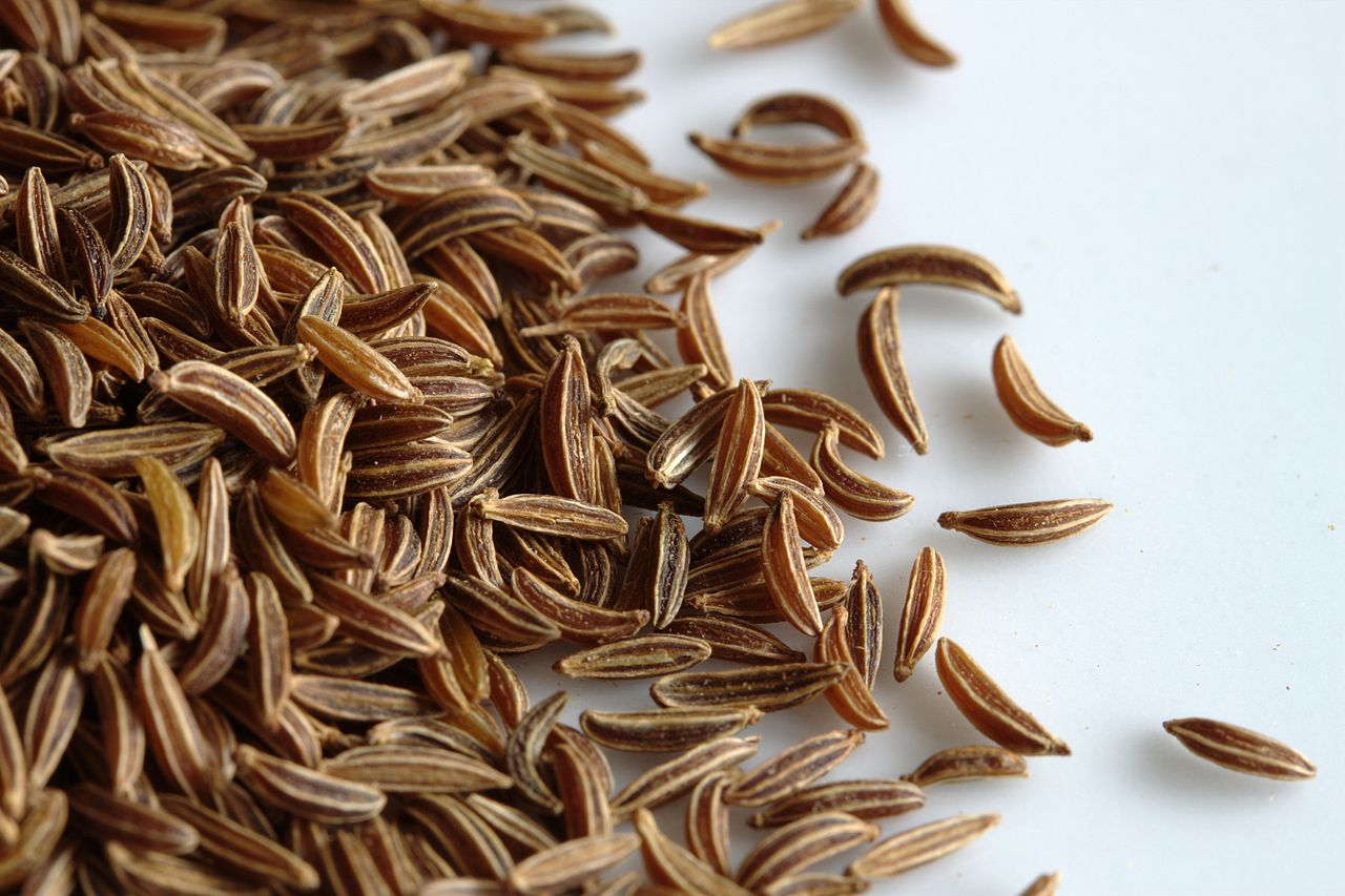 Image result for caraway plant