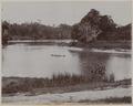 KITLV - 53179 - Lambert & Co., G.R. - Singapore - Botanical Garden at Singapore - circa 1895.tif