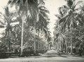 KITLV - 80219 - Kleingrothe, C.J. - Medan - Delilaan in Medan, Sumatra - 1898.tif