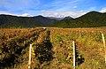 Kakheti, Georgia — Georgian vineyards.jpg